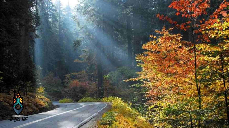 بازدید از جنگل ناهارخوران | زیباترین جنگل ایران