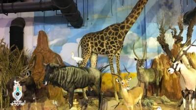 موزه حیات وحش ؛ موزهای با تعریفی تازه از حیات وحش