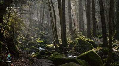 جنگل جیغ، ترسناک ترین جنگل ایران