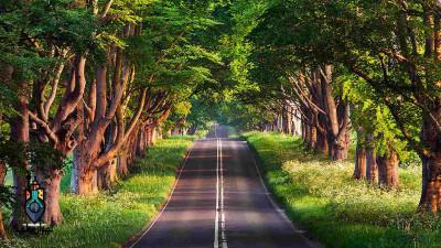 جنگل گیسوم   مرزی بین دریا و خشکی